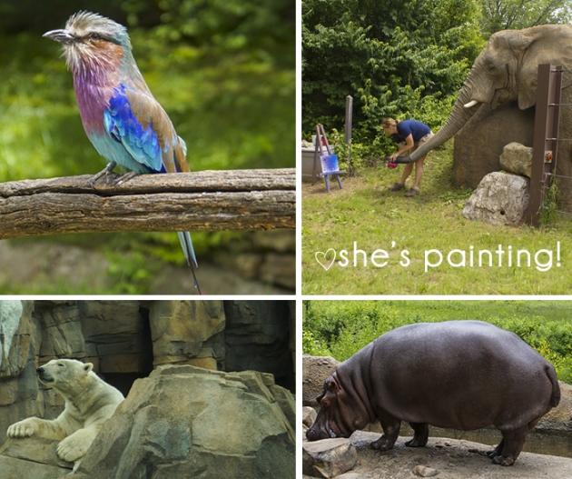 details-animals